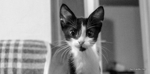 Motivele pentru care o pisica este mai buna ca un caine (la bloc, cel putin)